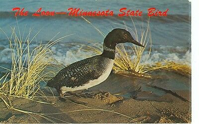 MINNESOTA STATE BIRD-THE LOON--(BIRDS-103*)