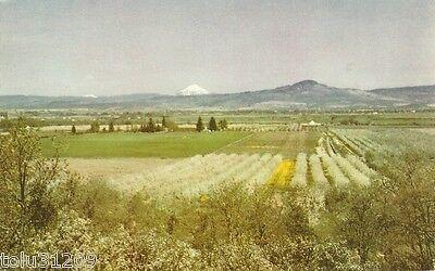 "Vintage Chrome Union Oil PC ""Rogue River Valley"" Oregon ca. 1950 DB/up"