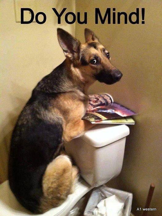 "Humorus German Shepherd dog  fridge magnet 2 1/2 X 3 1/2 """
