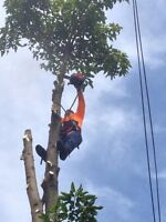 Tree service,removal and disposal.