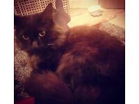 Missing Black Cat - E8