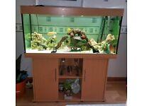 Juwel Rio 300 Aquarium Fish Tank
