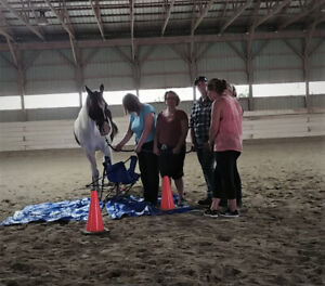 Equine Assisted Learning  Five Day Course