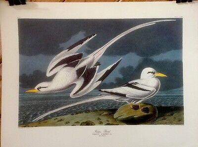 FINE ART LITHOGRAPH: Tropic Bird Book Plate By John J Audubon 21 X 16