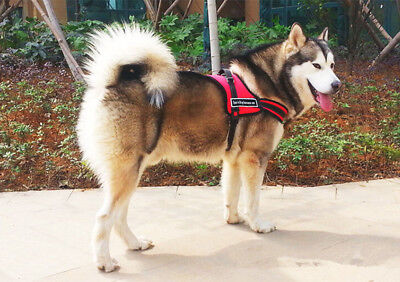 Sports Dog Harness Set Nylon PADDED Adjustable Puppy Working Trainning-Red XS