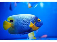 Assistant manager required for busy aquatic and reptile retail store - Aquajardin