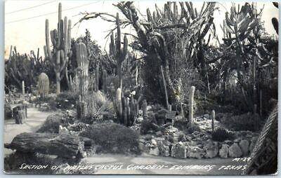 "Edinburg, Texas RPPC Photo Postcard ""Section of Pirtle's Cactus Garden"" c1950s"