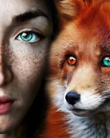 How to Tame A Fox ......   Photos of Tame Foxes