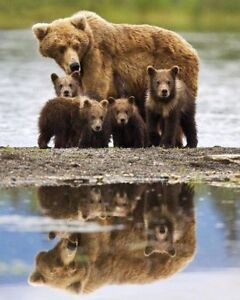 Big Savings on Vancouver Island Grizzly and Whale watching tours