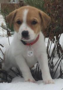 "Baby Male Dog - Mixed Breed: ""Goose"""