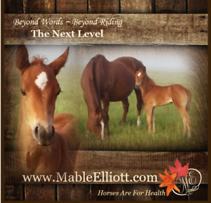 Beautiful gentle horses for sale