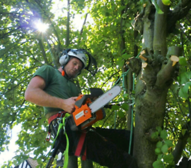 Gabriel's landscape gardening and Tree Services