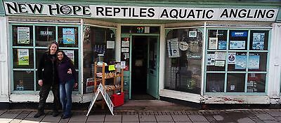 New Hope Reptile Rehome