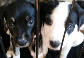 mixed breed puppies looking for forever home