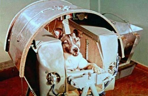 First Dog to Orbit Earth PHOTO Laika the Space Dog, Soviet Union Program Flight