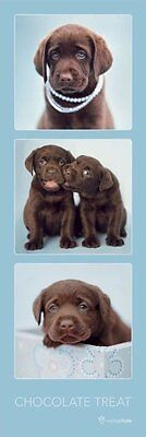 Poster DOGS by Rachael Hale - Chocolate Treat - 3 Pics NEU  y104