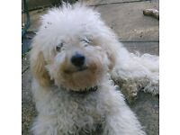 34 Year old man and his well behaved poodle x bichon looking for a suitable place for us both