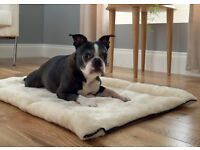 NEW: 2 IN 1 Pet Bed