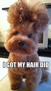 Quality dog grooming - affordable prices