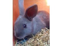 Baby bunny-Grey/Girl-Ready now