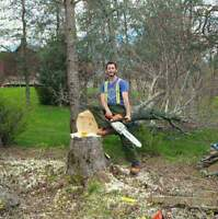 Tree removal by a utility arborist with certification