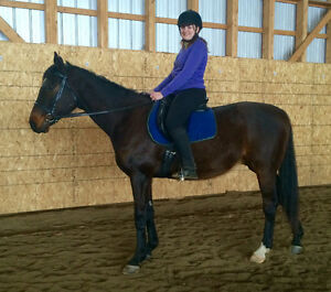 Big, Beautiful Thoroughbred Gelding
