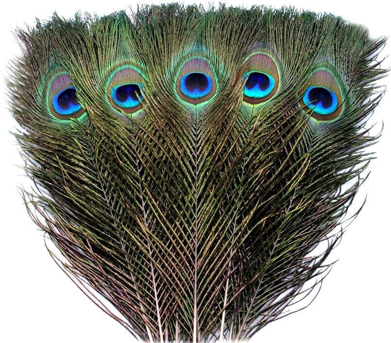 10Pcs Natur-Pfauenfedern Pfauenfeder Pfauenaugen 25-30cm Federn Schmuck Deko