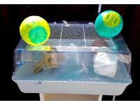 Large Hamster/Gerbil Cage Small Animal home house plus two hamster exercise balls
