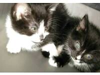 Rescue adorable kittens