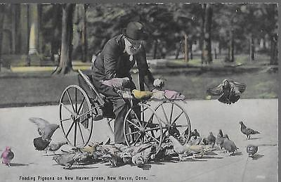 POSTCARD-FEEDING PIGEONS ON NEW HAVEN GREEN, NEW HAVEN, CONN-UNUSED-LINEN