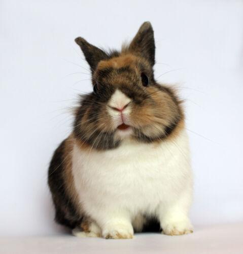 Raus aus dem Käfig: Tipps für den Bau von artgerechten Gehegen für Kaninchen und Meerschweinchen