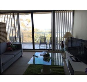 Penthouse-1 bedRoom for rent St Leonards Willoughby Area Preview