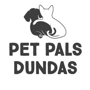 Cat Sitting - Dundas - Experienced, Bond & Insur. w/ Pet 1st Aid