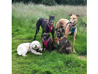Pawfect Therapies Dog Walking & Pet Sitting Services