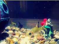 2 Angel fish & 2 Silver shark fish