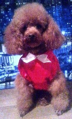 Red Satin Christmas & Special Occasion Party Dress (Small) for Dogs & Pet