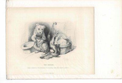 VINTAGE OLD SKETCH OF THE BEGGAR DOG BEGGING FOR FOOD AD PRINT #B926