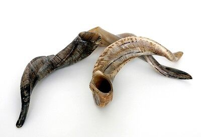 Classy Sheep Horns Sheep Horn Polished Antlers Aries Goat Farm Hunting Antlers