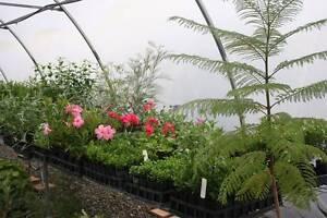 Tubestock Plants for Sale Abermain Cessnock Area Preview