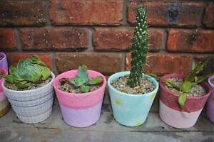 Succulents in colourful ceramic pots Riverside West Tamar Preview
