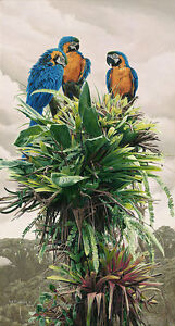 The Three Amigos Blue andGold Macaw by Rod Frederick CANVAS