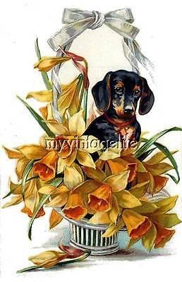 Vintage DACHSHUND DOG in basket of flowers Quilting Fabric Blocks 5x7