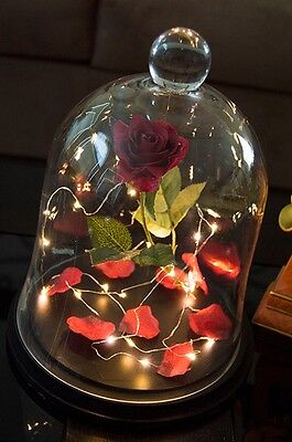 Handmade Custom Enchanted Rose in Glass Case Inspired by Beauty and the Beast