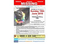 REWARD: Missing Cat from Tolleshunt Darcy , Essex. Black DSH with small white patch on neck/chest