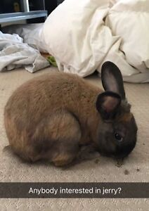 Bunny for sale!!!