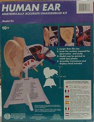 Lindberg Human Ear Educational Model Kit Large Size 1991 Unbuilt Box Toys