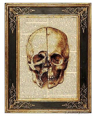 Da Vinci's Skull Study Art Print on Antique Book Page Vintage Illustration