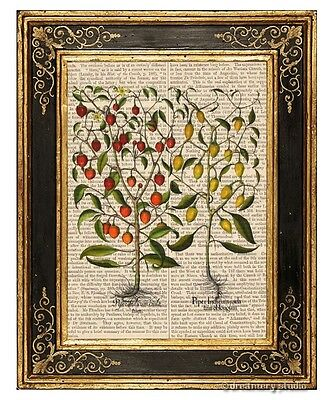 Hot Chili Pepper Plant #1 Art Print on Vintage Book Page Home Kitchen Decor Gift Pepper Kitchen Decor