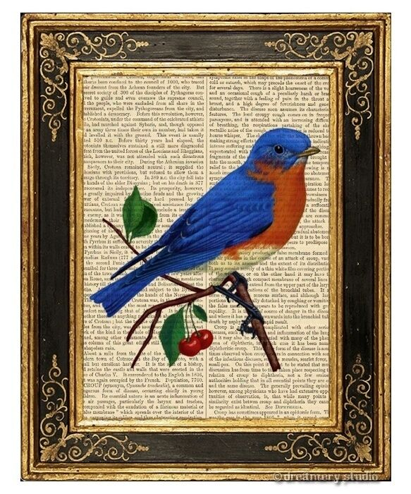 Eastern bluebird Art Print on Vintage Book Page Home Office Wall Hanging Decor