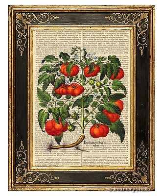 - Heirloom Tomatoes Art Print on Vintage Book Page Garden Home Kitchen Decor Gifts